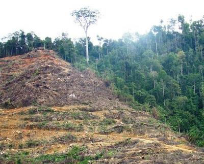 Ue non ferma legno fuorilegge, arriva pagella salva-foreste