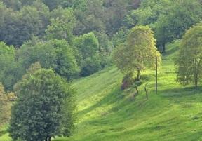 Regione Lombardia PSR 2014-2020: bando Operazione 8.1.01 'Forestazione e imboschimento'